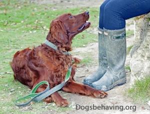 dog-training-look