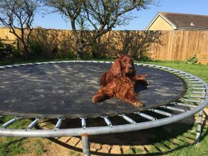 One of our dogs loved the trampoline, for sunbathing and looking over the fence!