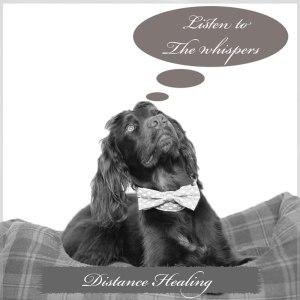distance animal healing